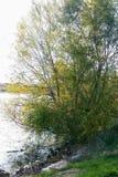 Árbol y agua foto de archivo libre de regalías