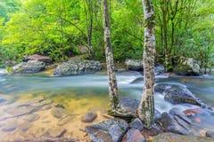Árbol y agua Imagen de archivo libre de regalías