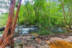 Árbol y agua Fotografía de archivo libre de regalías