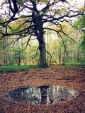 Árbol y agua en el bosque Fotografía de archivo