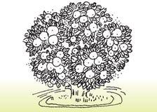 Árbol y ambiente Fotografía de archivo