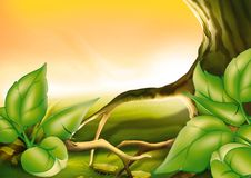 Árbol y arbustos Fotografía de archivo libre de regalías
