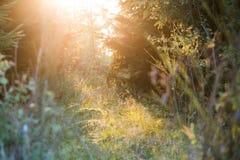 Árbol y arbustos vistos contra luz del sol en el brezo de Trupbacher fotos de archivo