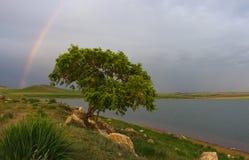 Árbol y arco iris Fotos de archivo libres de regalías