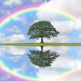 Árbol y arco iris de roble Imagen de archivo libre de regalías