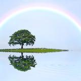 Árbol y arco iris de roble Fotos de archivo libres de regalías