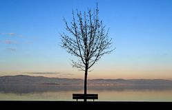 Árbol y banco desnudos en la orilla de un lago foto de archivo