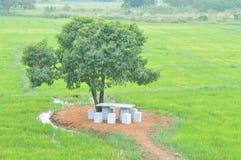 Árbol y banco en el campo de arroz fotos de archivo libres de regalías