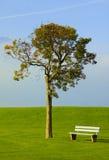 Árbol y banco en un césped ideal Fotografía de archivo libre de regalías