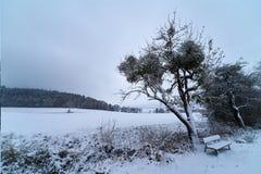 Árbol y banco Nevado antes de un campo fotografía de archivo