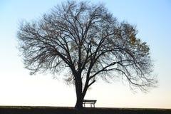 Árbol y banco solos imagenes de archivo
