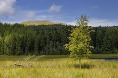 Árbol y bosque imagen de archivo