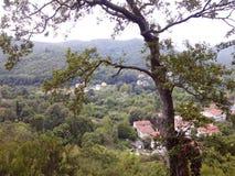Árbol y bosque hermosos, visión natural Foto de archivo