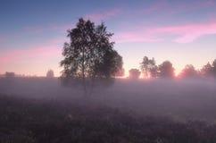 Árbol y brezo de abedul en niebla Imagen de archivo