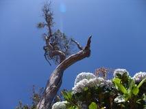 Árbol y Bush de Kauai Foto de archivo libre de regalías