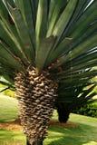 Árbol y césped Fotografía de archivo libre de regalías