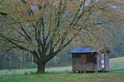Árbol y cabaña Fotografía de archivo