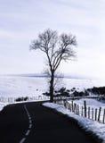Árbol y camino en invierno Fotografía de archivo libre de regalías