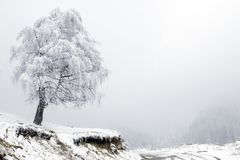 Árbol y camino solos en niebla en la montaña Fotografía de archivo