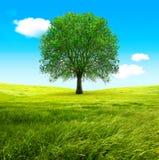 Árbol y campos verdes Foto de archivo