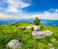 Árbol y cantos rodados en prado de la ladera en montaña en la salida del sol Fotos de archivo libres de regalías