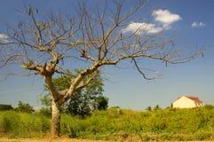 Árbol y casa fotos de archivo
