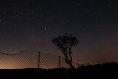 árbol y cerca de la rejilla contra el cielo por completo de estrellas Imágenes de archivo libres de regalías