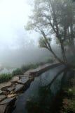 Árbol y charca en la niebla Fotos de archivo
