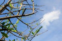 Árbol y cielo fotografía de archivo
