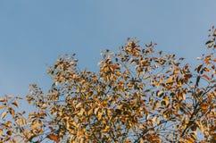 Árbol y cielo Fotos de archivo
