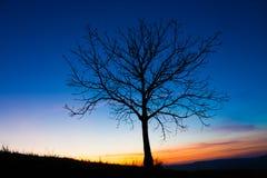 Árbol y cielo Imagen de archivo libre de regalías