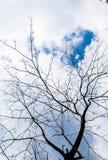 Árbol y cielo Imagenes de archivo