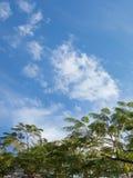 Árbol y cielo Foto de archivo