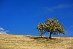 , árbol y cielo azul imagen de archivo