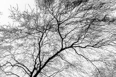 Árbol y cielo congelados Fotografía de archivo libre de regalías