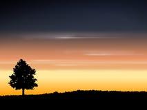 Árbol y cielo de la caída Fotos de archivo