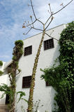Árbol y cielo espinosos. Foto de archivo libre de regalías