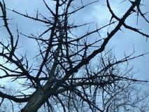Árbol y cielo nublado imagen de archivo