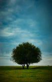 Árbol y cielo solitarios Foto de archivo
