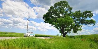 Árbol y coche Imágenes de archivo libres de regalías