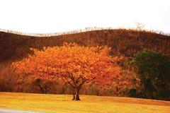 Árbol y colina quemada Fotos de archivo libres de regalías