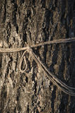 Árbol y cuerda Imagen de archivo libre de regalías