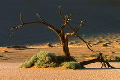 Árbol y duna Foto de archivo libre de regalías