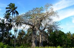 Árbol y el cielo, Tanzania del baobab fotografía de archivo
