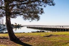Árbol y embarcadero de la pesca en el parque de Chula Vista Bayfront Imagen de archivo libre de regalías