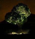 Árbol y estrella fotografía de archivo