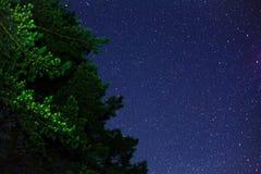 Árbol y estrellas verdes en el cielo azul Fotos de archivo libres de regalías