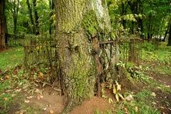 Árbol y fance Imagen de archivo libre de regalías