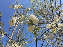 Árbol y flores Fotografía de archivo libre de regalías