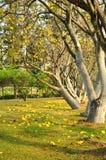 Árbol y flores amarillas imagenes de archivo